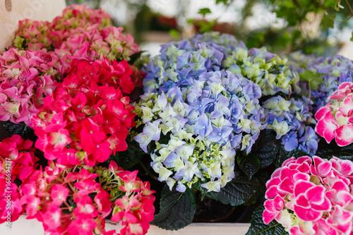 Fotobehang Hydrangea hydrangea flowers