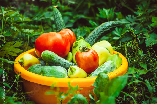 Poster Vegetables in a basin on a grass