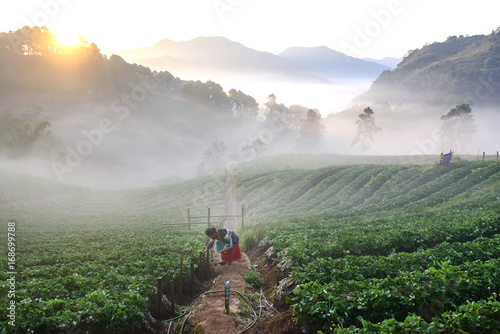 Aluminium Grijs Palong tribe woman collecting strawberry in a field.