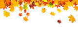 autumn leaves background - 168713575