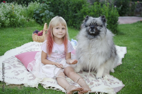 Four year old blond girl with pet on the grass. Keeshond grey fluffy dog.