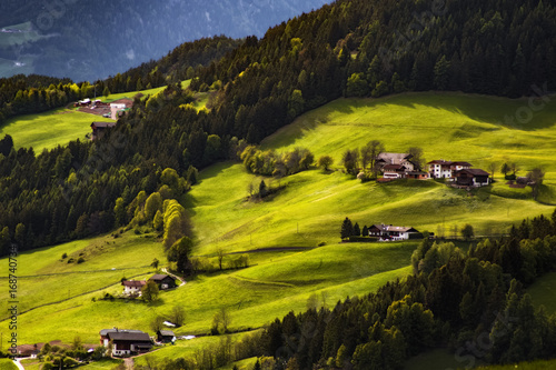 Fotobehang Grijze traf. Beautiful green meadow at sunset. Nature landscape