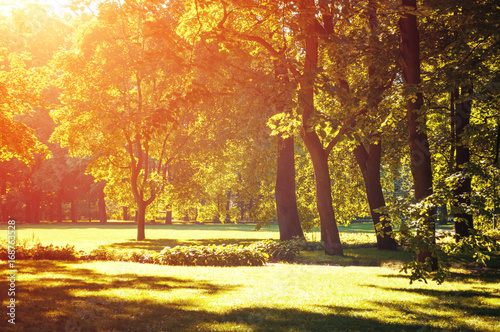 Autumn landscape, autumn park in with golden autumn trees lit by sunlight - 168763528