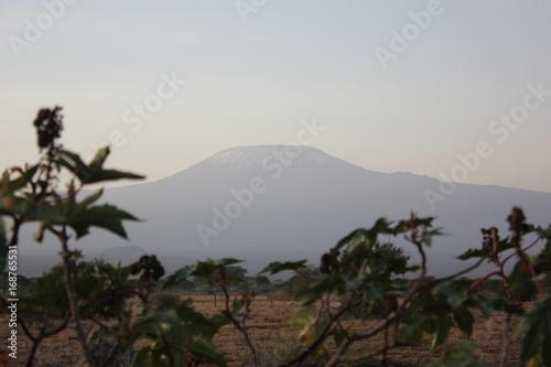 Fotobehang Chocoladebruin Amboseli National Park Kenya Safari