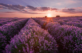 Lavender fields. Beautiful image of lavender field. Summer sunset landscape, contrasting colors. Dark clouds, dramatic sunset. - 168766705