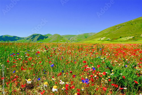 Panorama of sibillini mountains in spring with the flowering of Castelluccio di Norcia in Umbria Italy