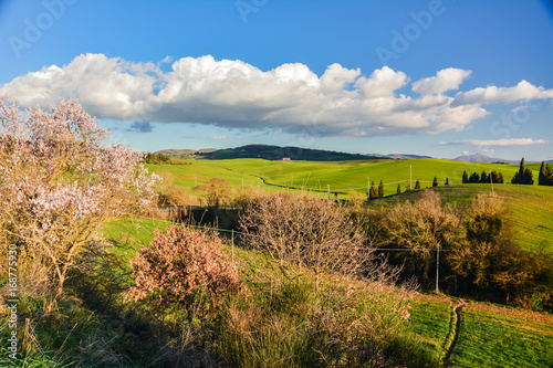 Poster Spring landscape in the hills of Tuscany Italy, land of Brunello wine