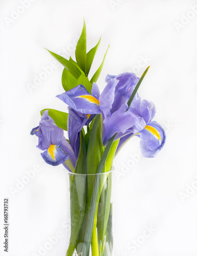 Aluminium Iris Bouquet of violet lily flowers on white background.
