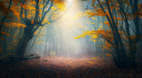 Fototapety Fairy forest in fog. Fall woods. Enchanted autumn forest in fog in the morning. Old Tree. Landscape with trees, colorful orange and red foliage and blue fog. Nature background. Dark foggy forest