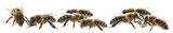 worker bees isolated on a white background - 168813501