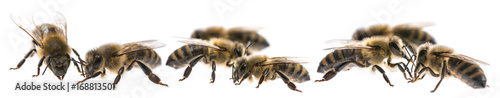 Aluminium Bee worker bees isolated on a white background