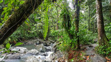 El Yunque National Forest  - 168816971