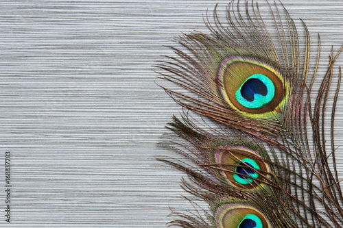 Fotobehang Pauw Peacock feathers background on stone