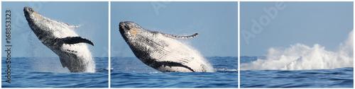 Impressionnant saut de baleine à l'île de la Réunion Poster