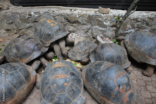 Aluminium Schildpad Tortues des Seychelles
