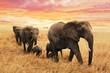 Quadro Familie Elefanten auf Pfad in Savanne