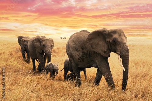 Familie Elefanten auf Pfad in Savanne Poster