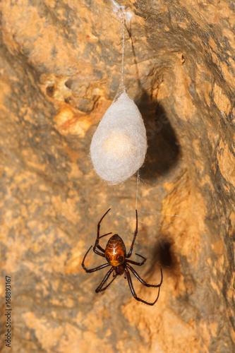 Araña cavernícola grande Poster