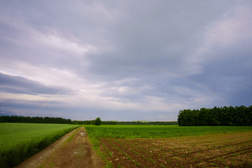 Rural agricultural landscape with rainbow over the forest