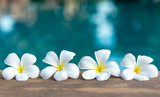 Tropical frangipani white flower near the swimming pool, flower spa. Copy space. - 168895529