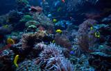 underwater background. Underwater scene. Underwater world. Underwater life landscape - 168936584