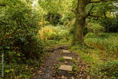 Papiers peints Route dans la forêt Footpath in the autumn forest