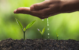 plant a tree natural background Plant Coffee seedlings in nature green fresh