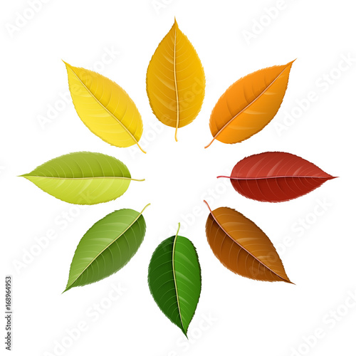 Autumn leaf set arranged in circle with color palette, isolated on white, for autumn design and decoration. Realistic vector illustration.