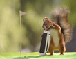 squirrel taking out Golf Clubs