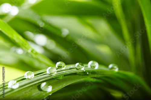 Foto op Plexiglas Gras water drops on the green grass