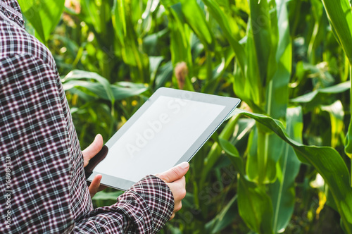 The woman farmer with the tablet PC in hands in the corn field