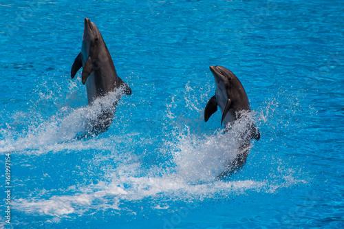 Fotobehang Dolfijn Dolphins