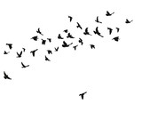 silhouette of flying birds - 168997348