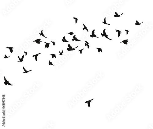 lecace-ptaki