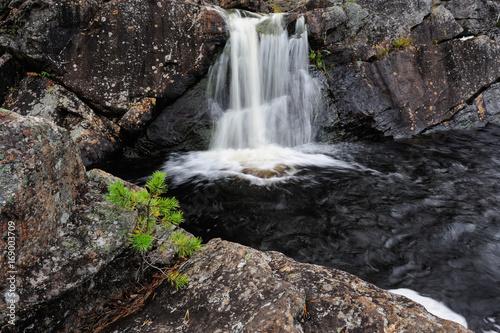Junge Kiefer vor Wasserfall, Hylströmmen, Schweden