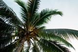 Palm Tree in Borneo