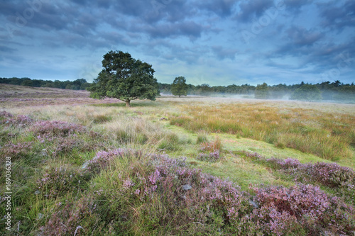 calm misty morning on marsh with heather - 169036328