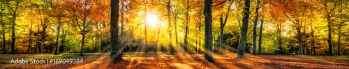 Buntes Herbstwald Panorama im Sonnenlicht