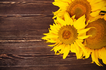 Sunflowers on wooden background. Autumn background