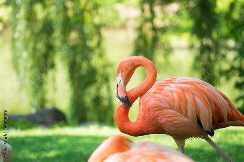 Plakat Watching Flamingo