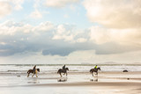 Horses at gallop on the beach at sunset - 169132395