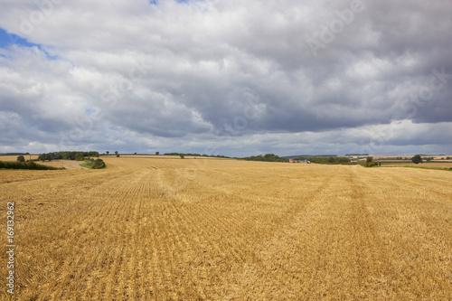 Fotobehang Donkergrijs harvested wheat fields