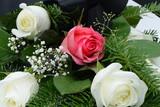 Blumen 843