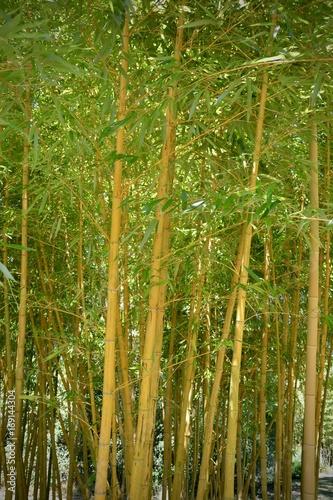 Fotobehang Bamboe Bambou