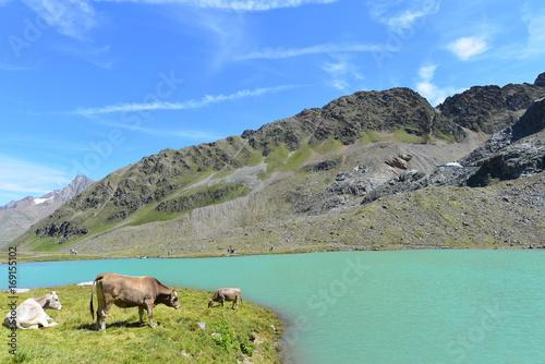 Foto op Plexiglas Bergen Weißsee im Kaunertal Ötztaler Alpen - Tirol
