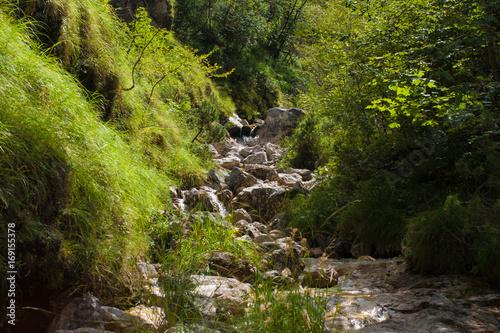 Papiers peints Rivière de la forêt valbelluna