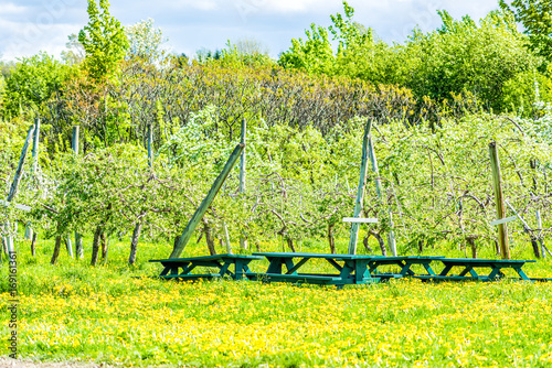 Fotobehang Geel Apple orchard with green trees, yellow dandelion flowers and picnic tables