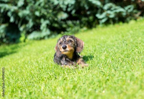 kleiner Hund genießt die Sonne