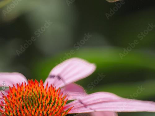 kwiat ogrodowy #2