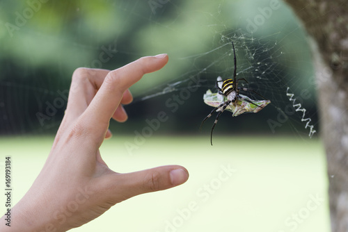 Spider that caught the prey